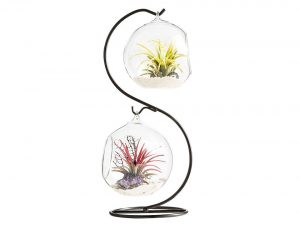 Mkono Clear Glass Vase Hanging Plant Terrarium with Black Metal Stand