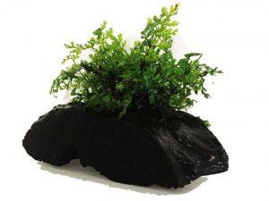 Anubias, Java Fern, Moss, Freshwater Live Aquarium Plants on Driftwood