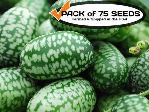 Cucamelon Seeds, Mexican Sour Gherkin Mini Watermelon Non-GMO Heirloom Seeds