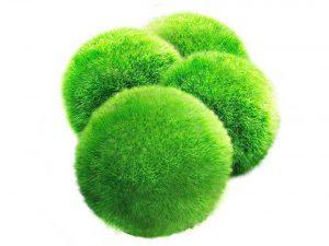 Luffy Marimo Moss Balls - Aesthetically Beautiful & Create Healthy Environment