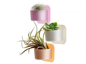 Silicone Shower Plant Holder - Succulent Plant Pot / Cactus Planter Pot. Silicone Planter Easily Sticks to a Window or Glass. Turn Your Shower Wall Into a Garden