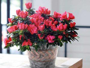 Flower Pots Metal Galvanized Garden Decor Planters