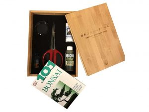 Bonsai Tree Starter Tool Kit in Bamboo Box