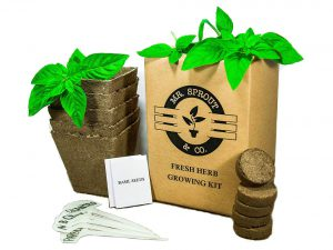 Mr. Sprout & Co.Organic Herb Seed Starter Kit